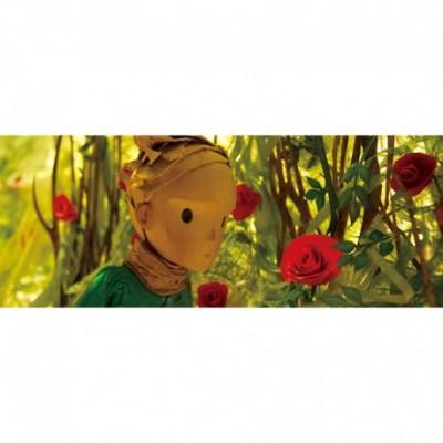 Puzzle Trandafiri - Little Prince HAPE